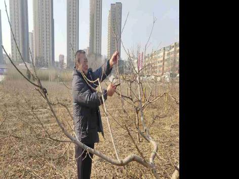 龙王沟试验场开展冬季苗木修剪工作